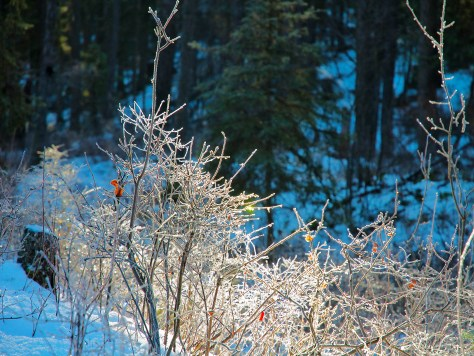 Frost, Low Branches, Home, Prisms