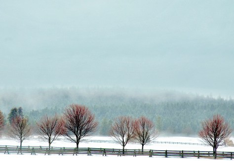 Fog, Pasture, New Buds, Fence, Trees
