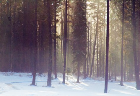Winter Scene, Home, Snow, Sun Through Trees