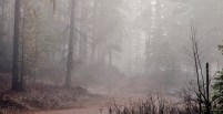 Forest, Fog, Trees, Road, Spring