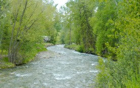 Grave Creek, Spring