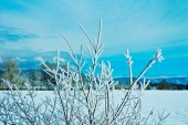Bare Branches on Bush, Snow, Pasture, Mountains as Smart Object-1