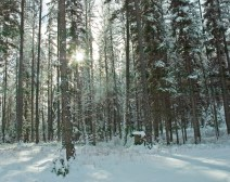 Sun Through the Trees, Solstice, Snow, Winter