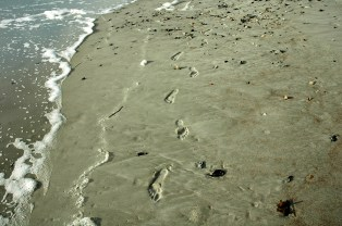 Footsteps in the Sand, Amelia Island, Short Version