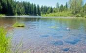 Flathead River, Apgar, Rocks, Grasses, BendRS