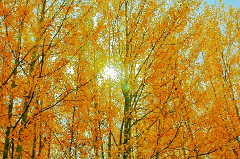 orange-leaves-fall-sun