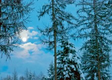 Moon, Three Trees, Night Sky, Snow