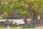 Three Elk, Under Tree, Shade, River, Yellowstone