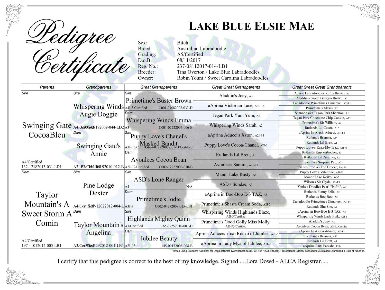 Pedigree Certificate Lake Blue Elsie Mae