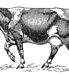 dairy cow vintage clip art [ 4688 x 2859 Pixel ]