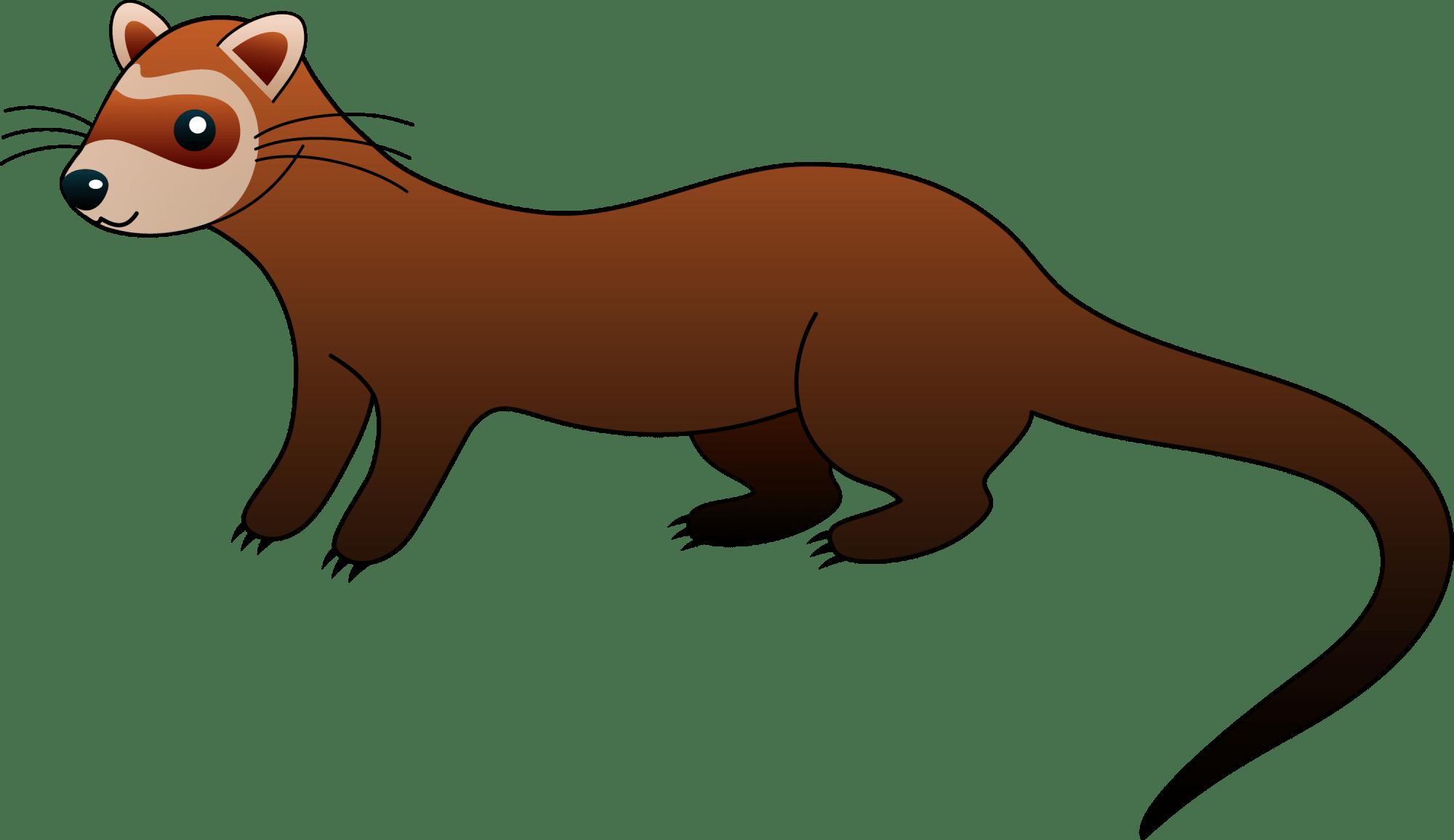 hight resolution of cute brown ferret clip art