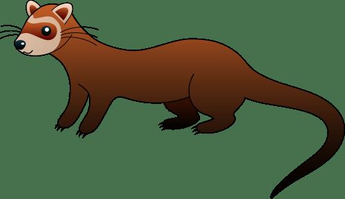 small resolution of cute brown ferret clip art
