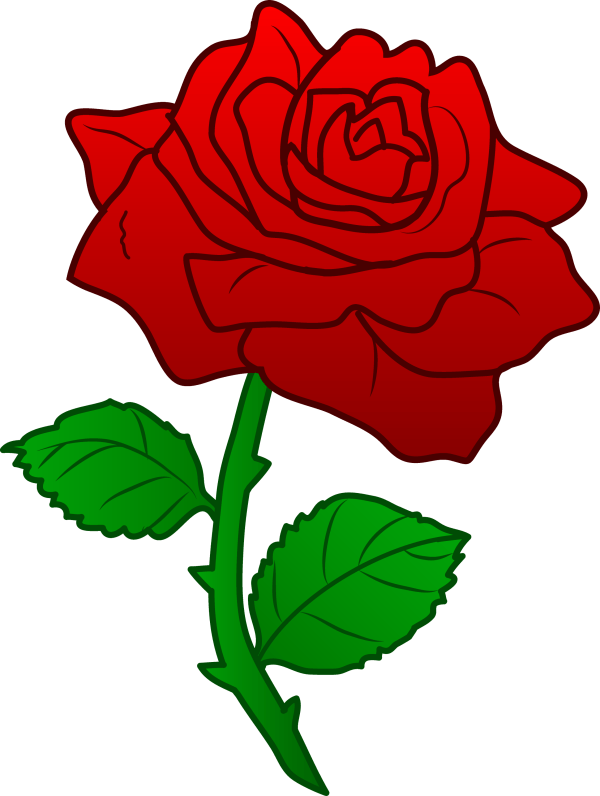 beautiful red rose - free clip