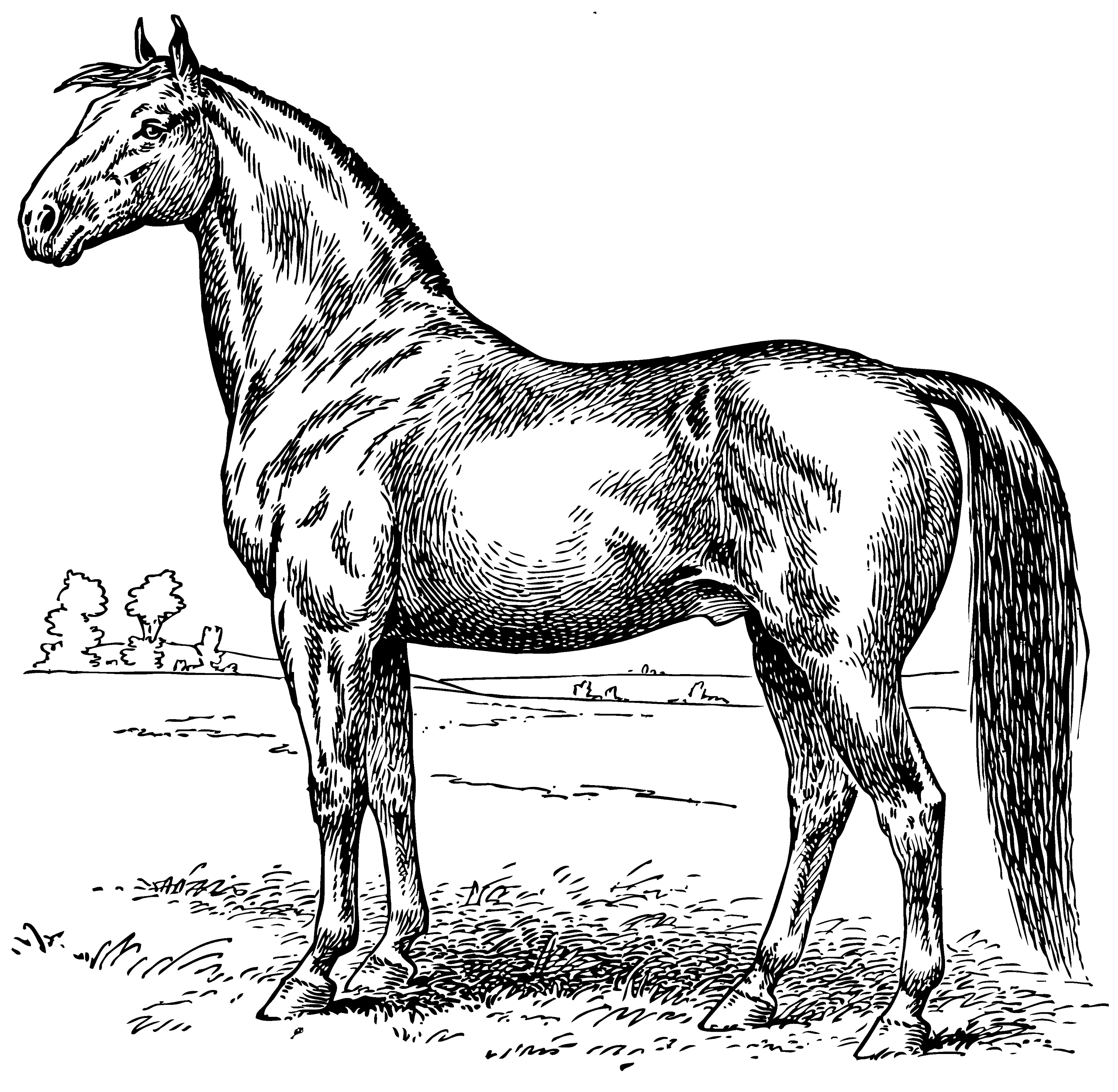 Vintage Horse Coloring Page