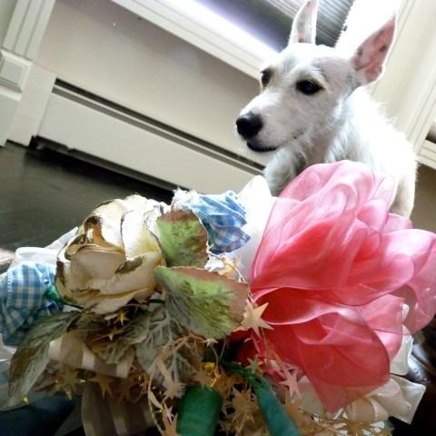Hopey Ribbon bouquet
