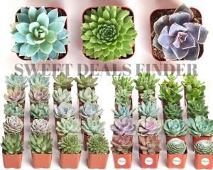Black Friday Deal! 30% Off Succulent Plants