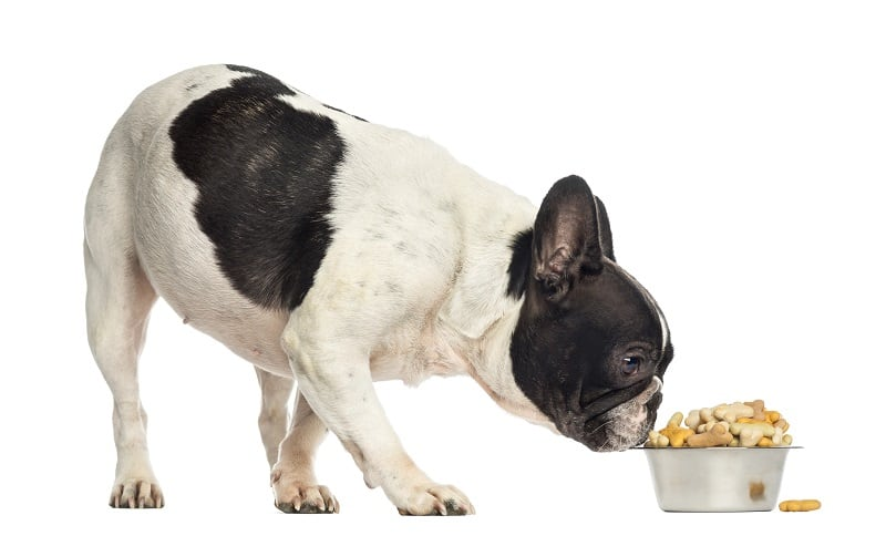 diet for a healthy french bulldog