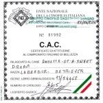 certificato cac