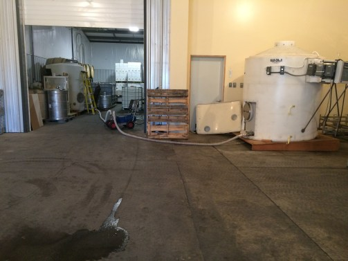 Racking white wine from one tank to another.