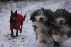 Yaga, Colin och Fly
