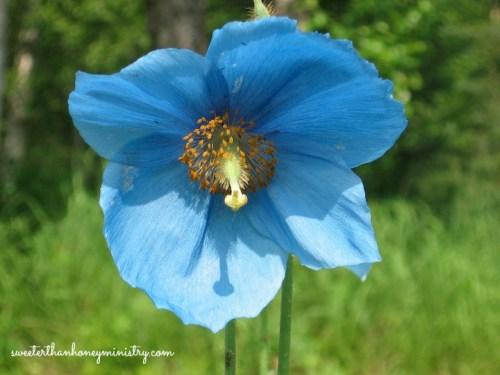 flower alaska