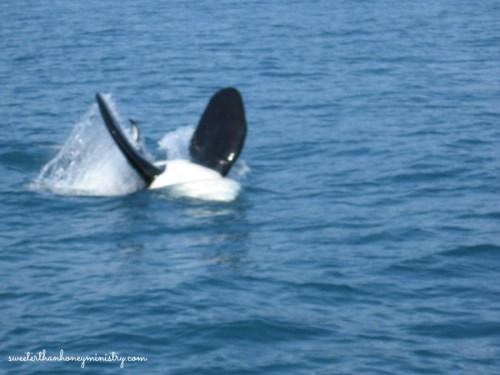 orca alaska
