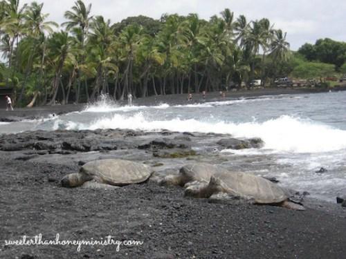 sea turtles hawaii