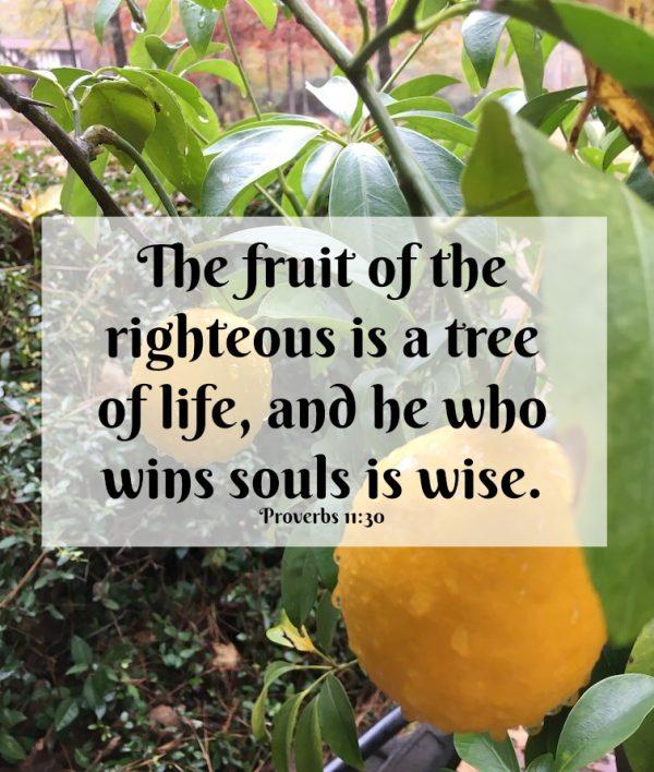 A Taste of Honey: Proverbs 11:30 –