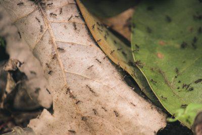 Keep Ants Off of Your Hummingbird Feeder