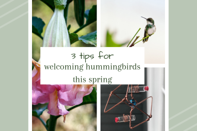 3 Tips for Welcoming Hummingbirds This Spring