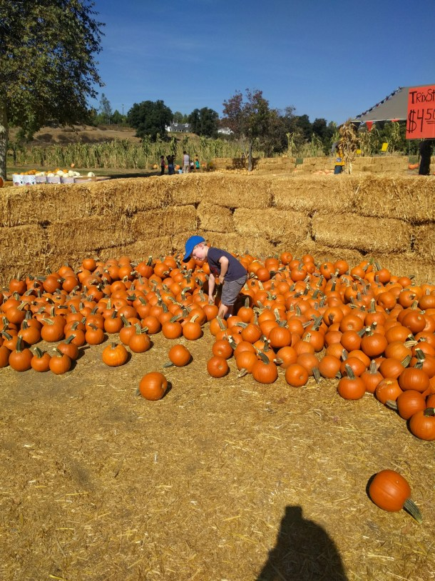 Pumpkin patch at Bates Nut Farm