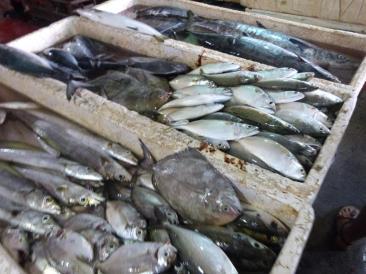 Marché aux poissons de Jimbaran