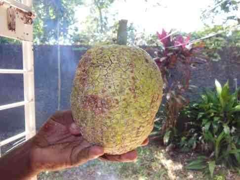 A Good Roasting Breadfruit