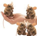 Four Speckled Brown Mice