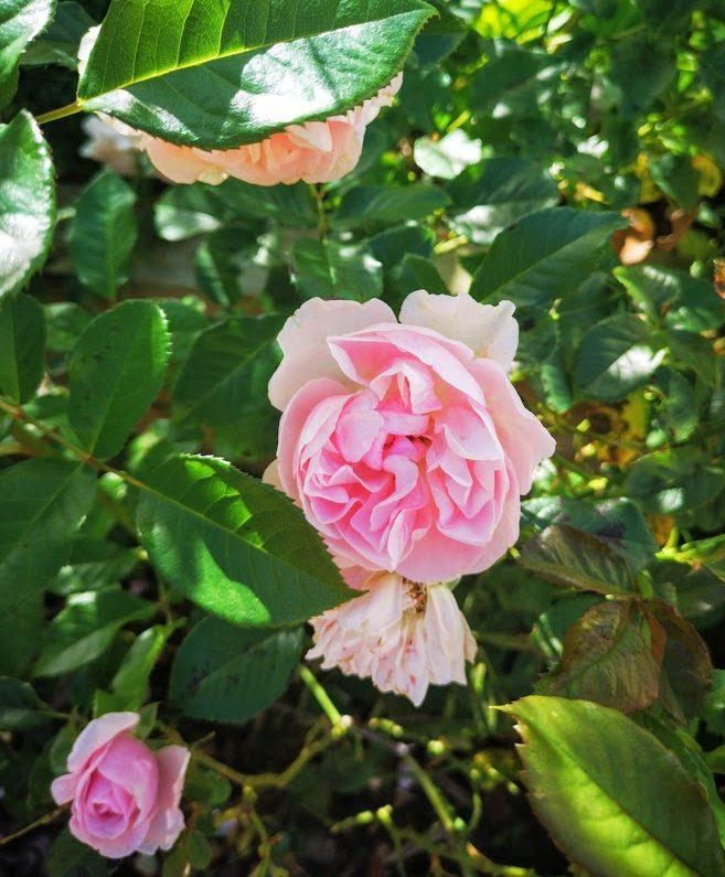 rose natasha richardson