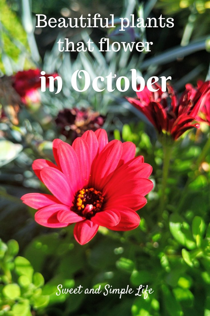 plants that flower in October