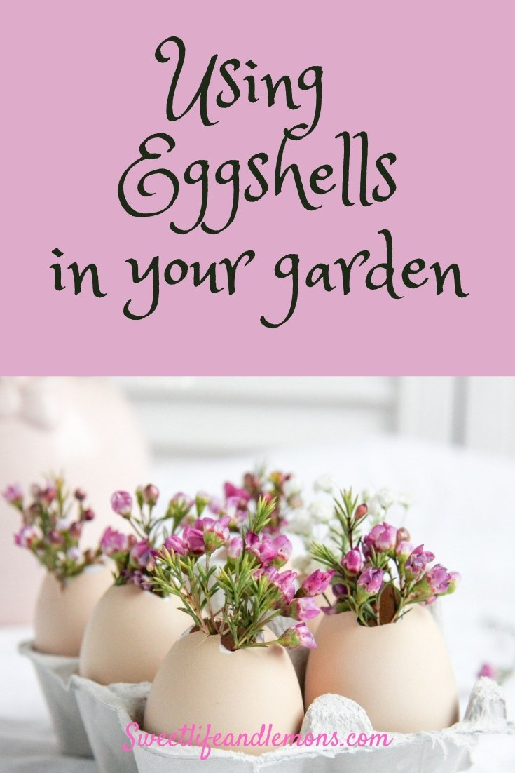eggshells and seedlings