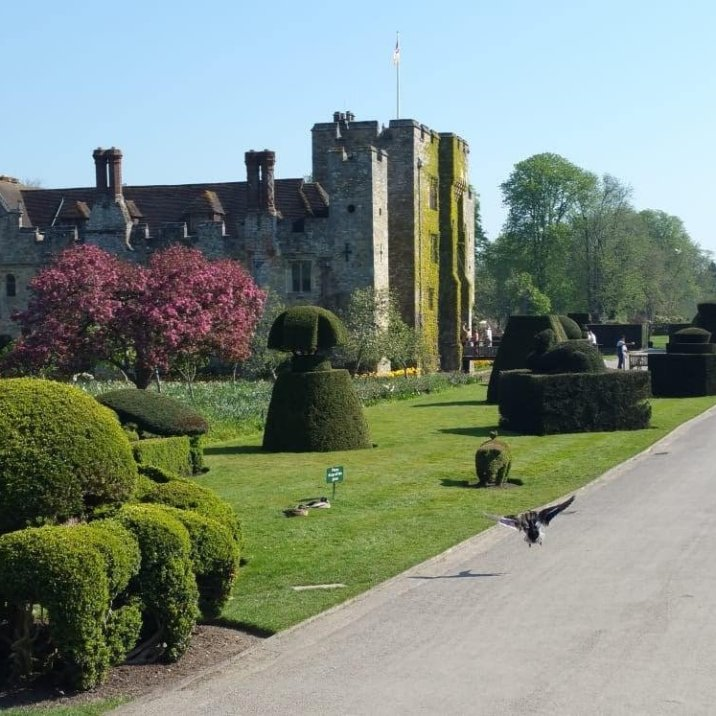 topiary at hever