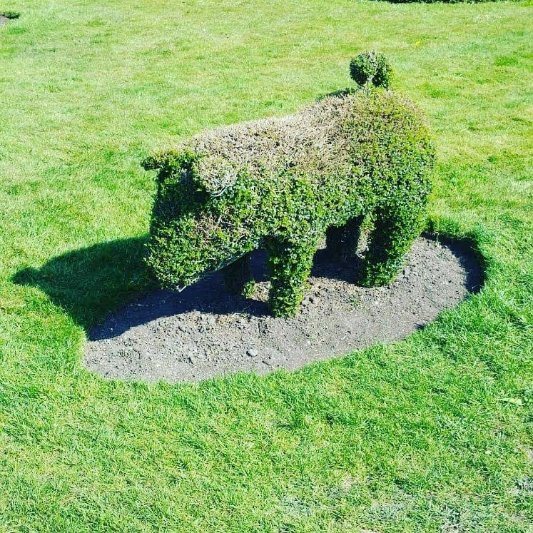 topiary pig