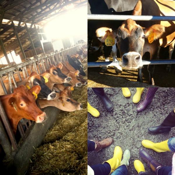 Tillamook Farm Tour