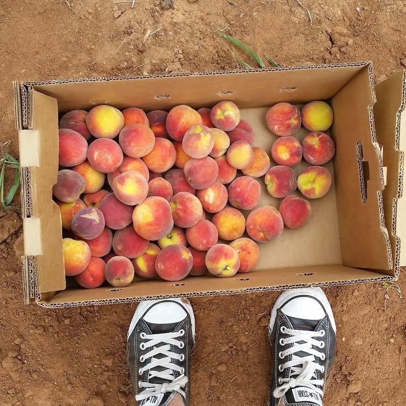 peach-picking-sweetlifebake