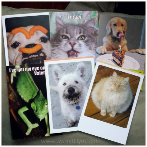 A few of Hallmarks Funniest Pet cards #FunnyPetCards #cbias
