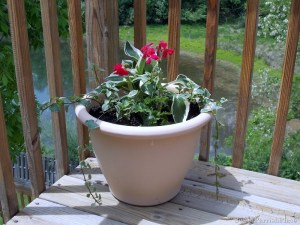 Planting Flowers in Containers- And a Painting Fail