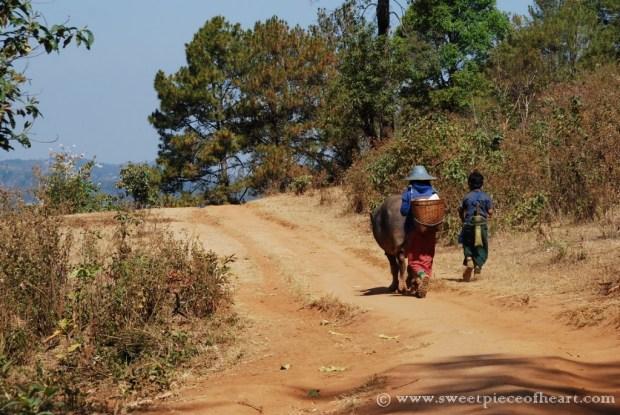 trek-kalaw-birmanie