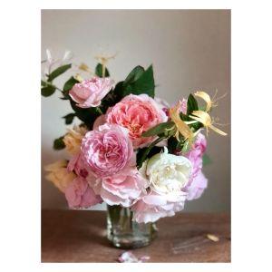 June Rose Glory