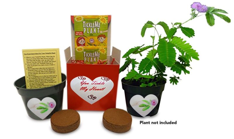 Enter to Win a TickleMe Plant Gift Box for Valentine's Day #TickleMePlant #ValentinesDayGifts