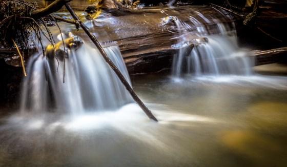 Half Moon Bay hike at Purisima Creek Redwoods Open Space Preserve | www.sweetteasweetie.com
