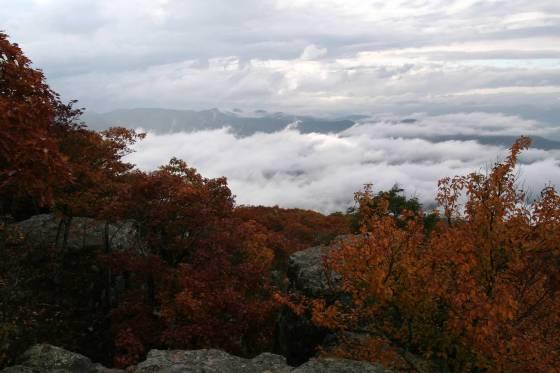 Fall at Big Meadows, VA | www.sweetteasweetie.com