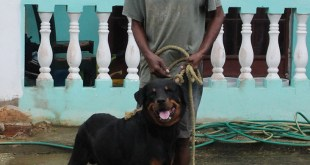 Simba, rottweiler in Manzanilla, in Sweet T&T for Sweet TnT Magazine in Trinidad and Tobago