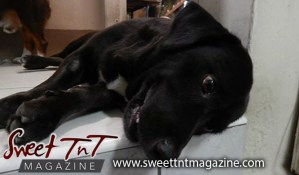 Man's best friend, Blackie dog, puppy on top dresser, My lovie pies, Candida Khan, Sweet T&T, Sweet TnT, Trinidad and Tobago, Trini, vacation, travel